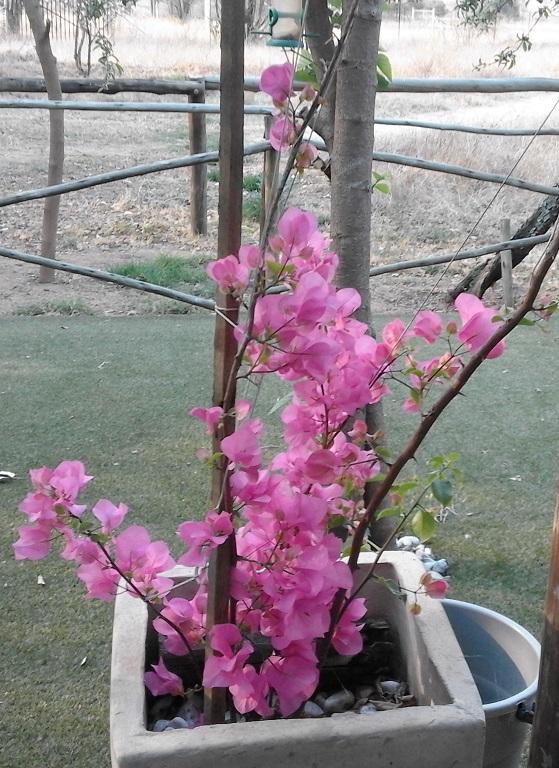 Spring in Sunrella